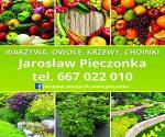 """""""U Maryni"""" Szkółka Krzewów Ozdobnych """"U Maryni"""" w Brzezówce Jarosława Pieczonki"""